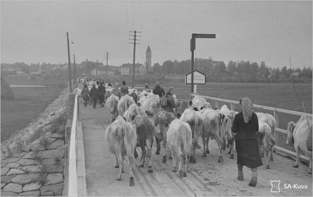 Sotiemme perinne_Lapin sota_karjan evakuointitehtävät jäivät Lapissakin usein nuorille tytöille.