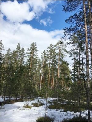 Vaikka ollaan jo huhtikuussa, ovat olosuhteet monin paikoin vielä varsin talviset